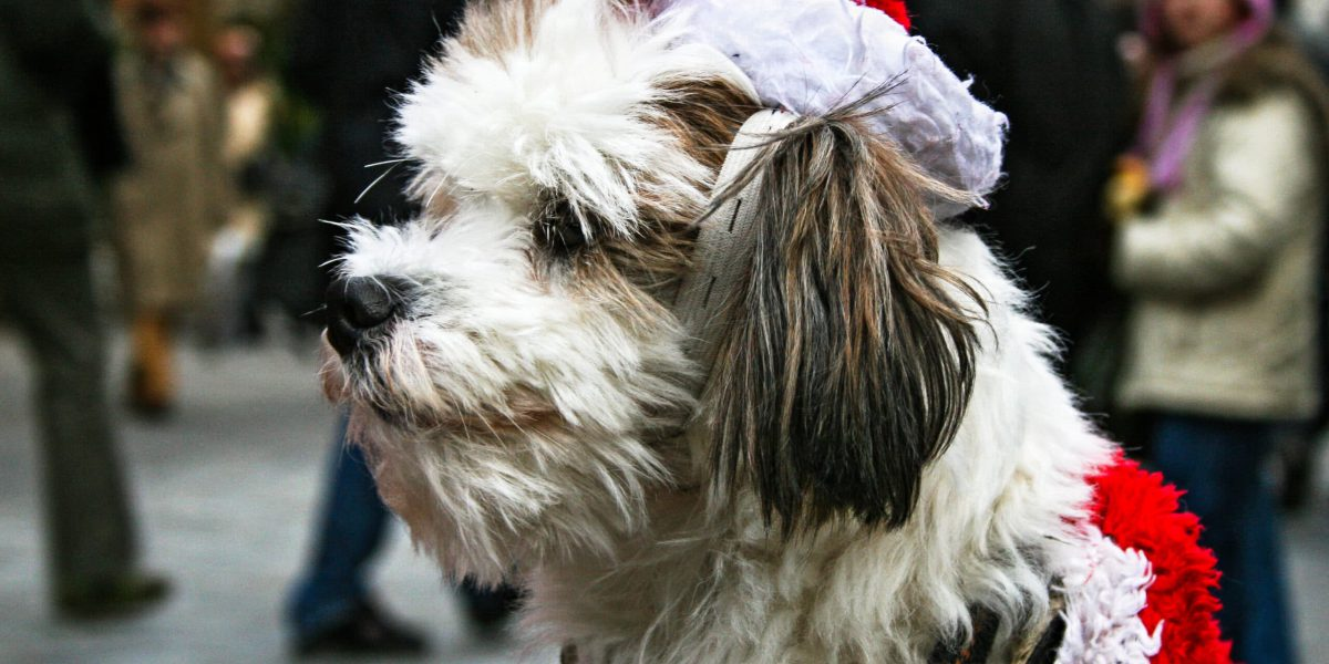 sitting dog with Santa costume at Nuremberg Christmas Market having a little smile and looking to the left for his owner