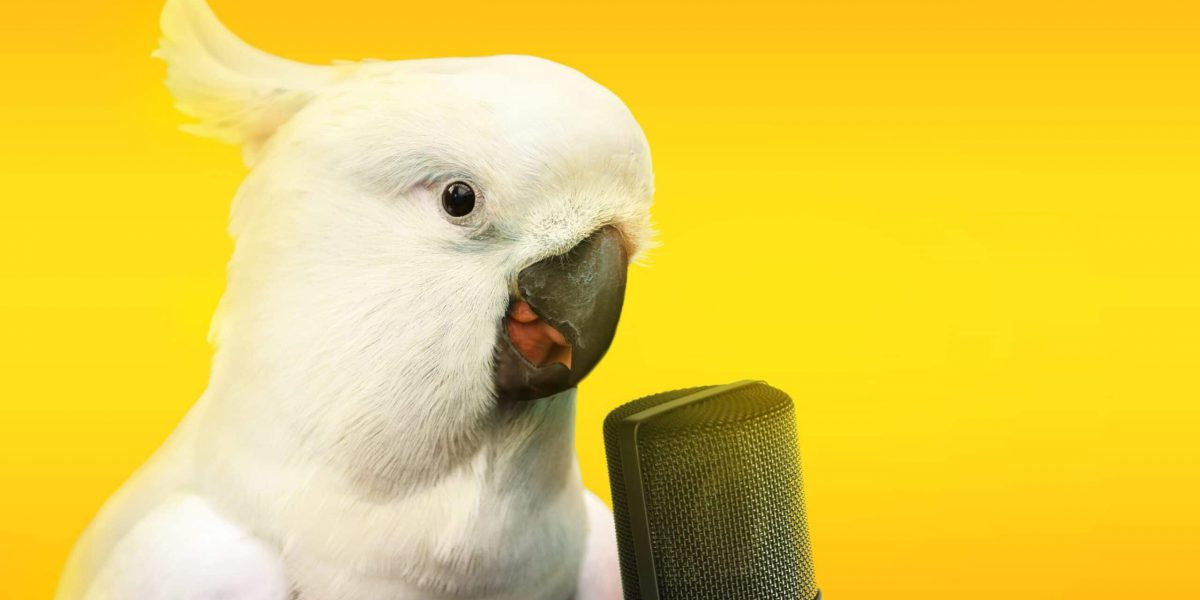 Cockatoo parrot talking with a microphone. Advertisement concept with wide copy space for text.