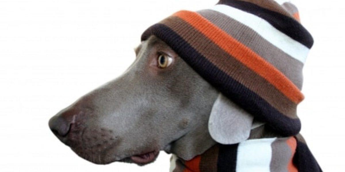 HundSchal