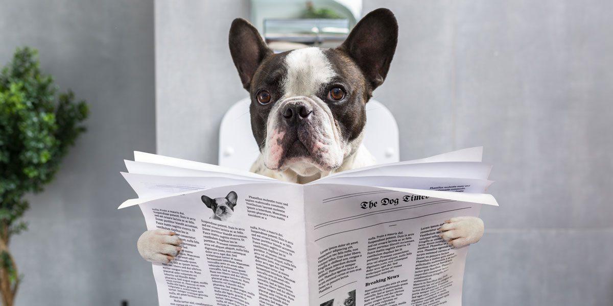 Tiermagazine